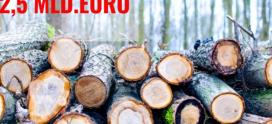Analiză Frames: România, țara care își vinde ,,aurul verde'', pădurile, cu ochii închiși